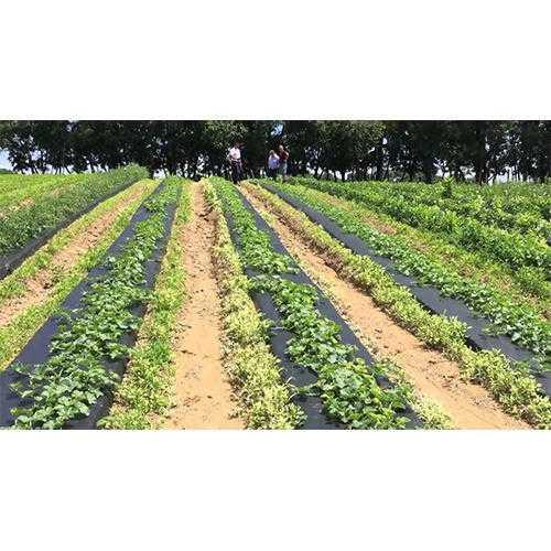 Agricultural Farms