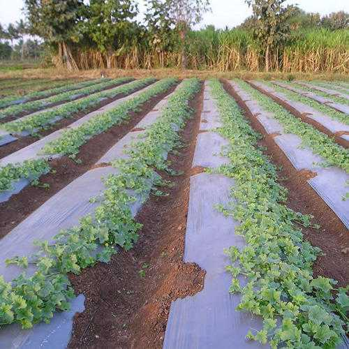 Agricultural Sheets