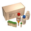 Bacteria Test Kits