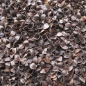 Cereal straw and husks, unprepared, whether or not chopped, ground, pressed or in the form of pellets