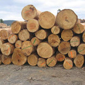 Sapelli, acajou d'Afrique and iroko in the rough, whether or not stripped of bark or sapwood, or roughly squared