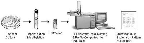 Microbial Identification
