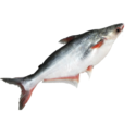 "Frozen fillets of catfish ""Pangasius spp., Silurus spp., Clarias spp., Ictalurus spp."""
