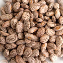 """Unshelled beans """"Vigna spp., Phaseolus spp."""", prepared or preserved otherwise than by vinegar or acetic acid"""