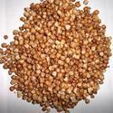 Roasted Wheat