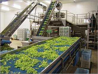 Vegetables Processing Plants