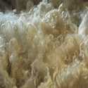 Greasy wool, incl. fleece-washed wool, neither carded nor combed