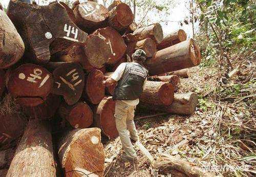 Wood Testing