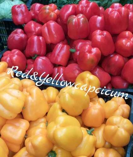 Yellow And Red Capsicum